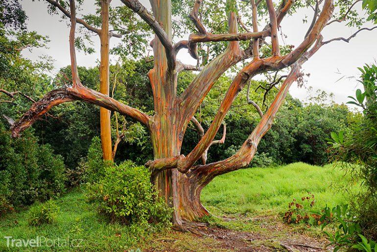 duhové stromy na Filipínách