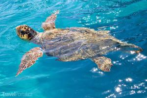 želvy Caretta-Caretta Zakynthos
