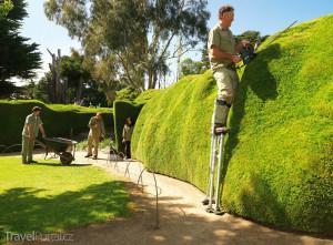 Ashcombe Maze & Lavender Gardens