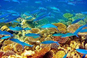 podmořský svět Mauricius