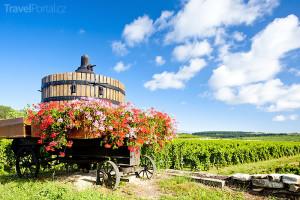 vinice Cote de Beaune Burgundsko