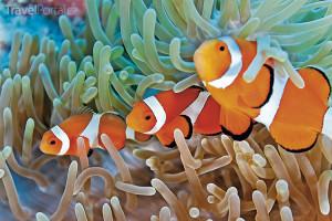 podmořský svět Egypt