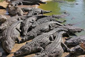 krokodýlí farma na Djerbě