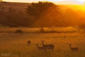 Uganda ráno