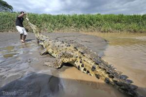 krmení krokodýlů Kostarika