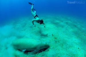 potápěč a dugong