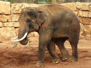 slon v Biblické zoo
