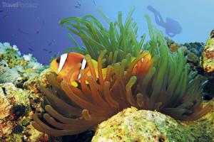 potápění v Egyptě