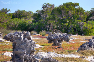 korály na souši na atolu Aldabra