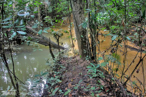 prales na ostrově Borneo