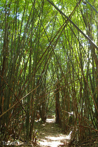 bambusová džungle v Laosu