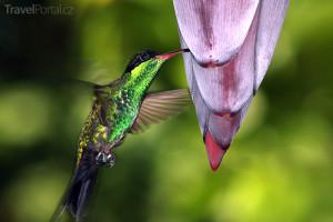 exotický pták