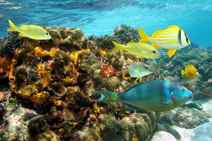 potápění na Jamajce