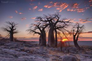 strom baobab