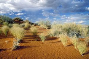 poušť Kalahari