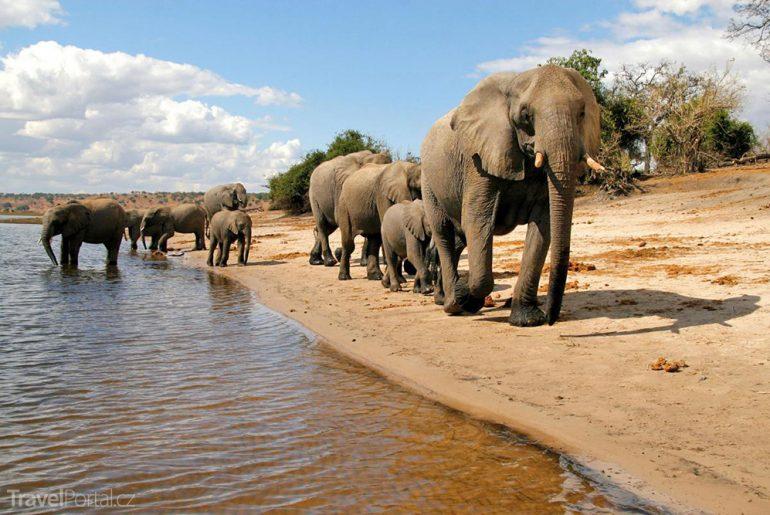 sloni v Botswaně