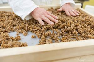 těstoviny z hmyzu