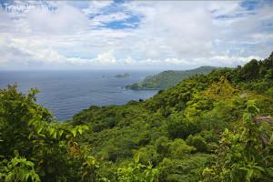 deštný prales Tobago Forest Reserve