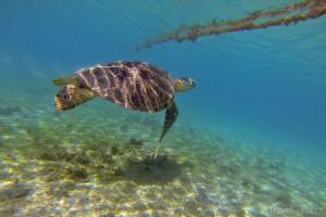 podmořský život na Mayotte