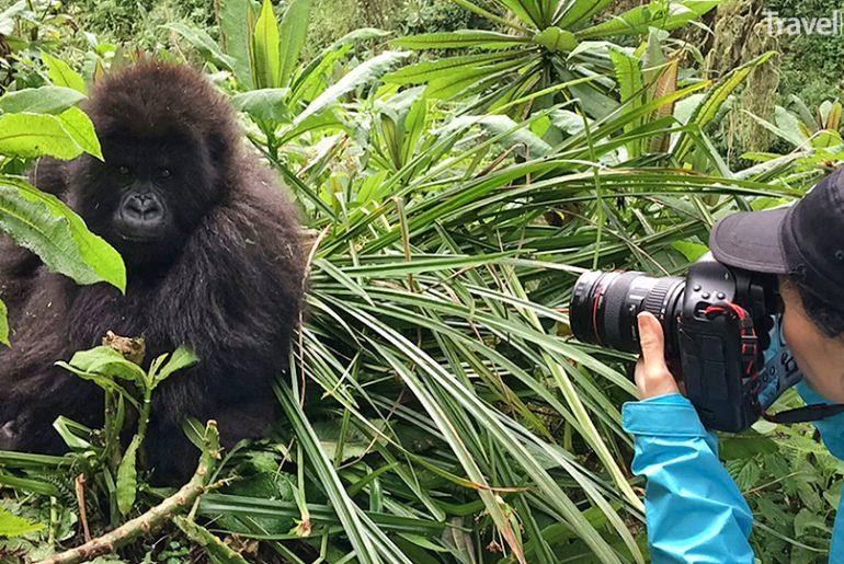 Markéta Schusterová se nebála fotografovat gorily zblízka