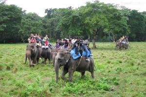 výlet na slonech