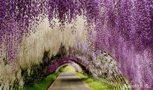 květinový tunel v Kitakjúšú