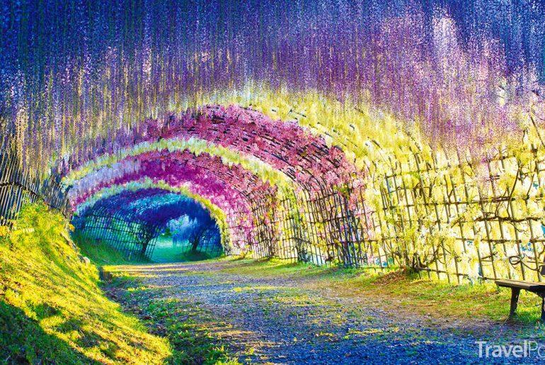 květinový tunel v Japonsku