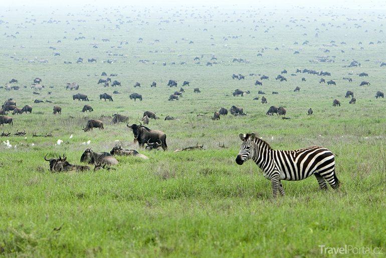 savana Serengeti
