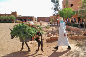 obyvatelka Ait Ben Haddou s oslem