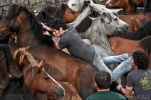 krocení divokých koní v Galícii