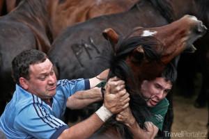 krocení divokých koní