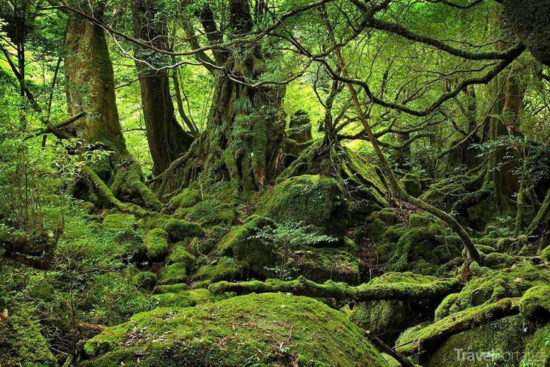 Aokigahara neboli Les sebevrahů