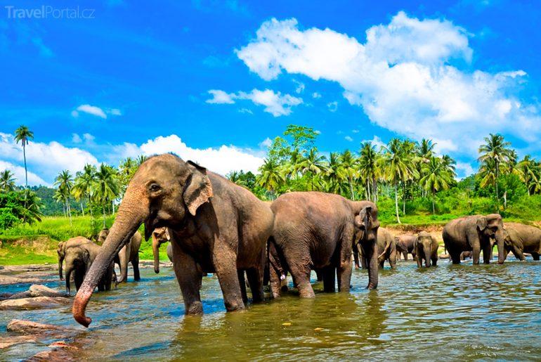 sloní sirotčinec na Srí Lance