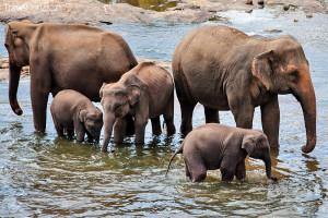 sloní sirotčinec
