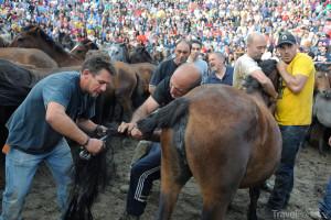 stříhání koňského ohonu