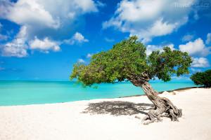 dovolená na Arubě