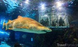 žralok v L'Aquàrium Barcelona
