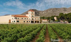 vinice v okolí obce Jumilla