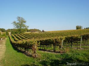 vinice v Charente