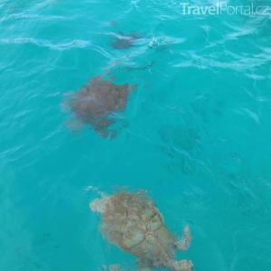 želvy v Karibském moři