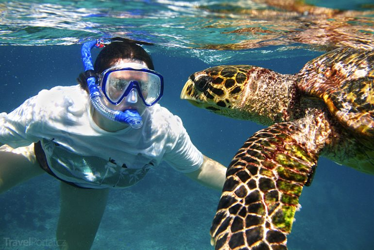 potápění se želvami