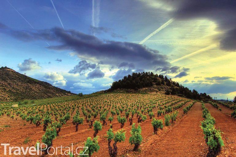 vinice v oblasti Rioja