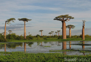 krajina s baobaby