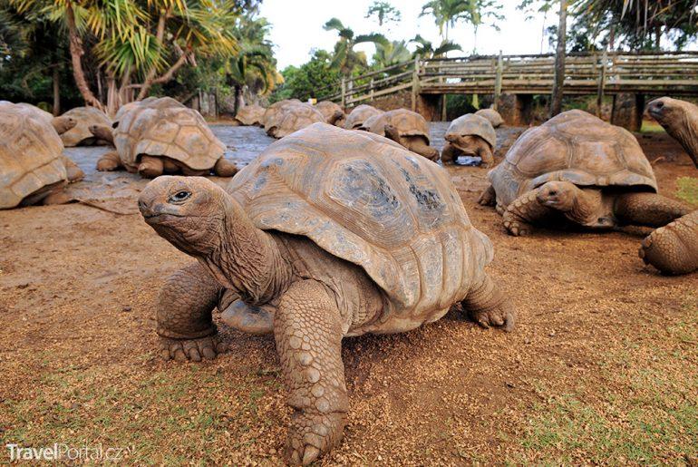 obří želvy