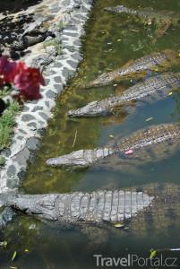 krokodýli na ostrově Mauricius
