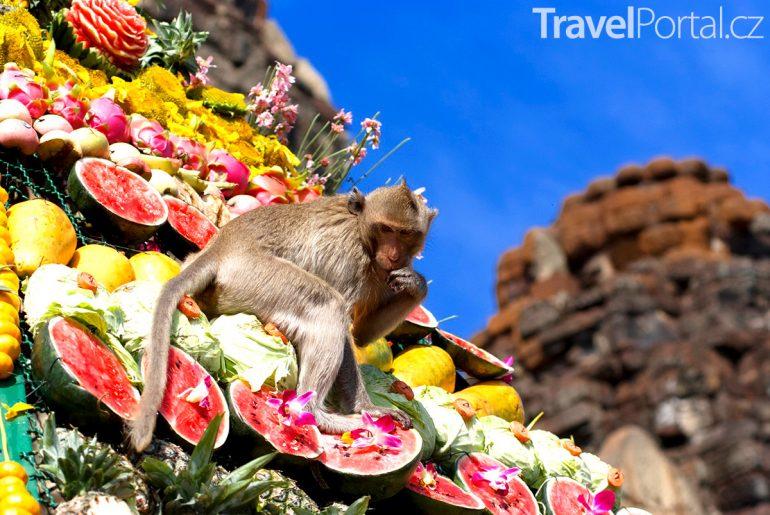 opice v Lopburi