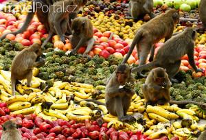 thajský Monkey Buffet Festival
