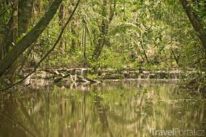 příroda v Belize