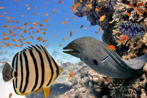 podmořský svět v Egyptě