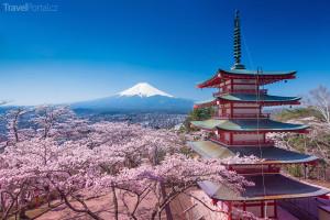 Kde najít nejkrásnější rozkvetlou třešeň? V Japonsku!
